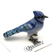BluejayLittle